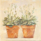 Echeveria Prints by Laurence David