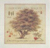Arbousiers de Maquis Print by Pascal Cessou