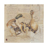 Les Canards Prints by Pascal Cessou