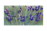 Irises by Kirsten Soderlind Giclee Print by Kirsten Soderlind