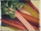 Chard Photographic Print by Jennifer Kennard