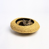 Gray Kitten Hiding in Hat Photographic Print by Pat Doyle