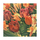 Tulips by Kirsten Soderlind Giclee Print by Kirsten Soderlind
