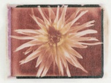 Flower Power Photographic Print by Kim Koza
