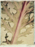 Kale Photographic Print by Jennifer Kennard