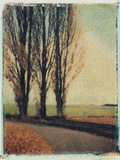 3 Poplars Late Fall Photographic Print by Jennifer Kennard