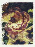 Monet's Flower Photographic Print by Kim Koza