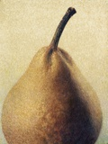 D'Anjou Pear Photographic Print by Jennifer Kennard