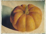 Pumpkin Photographic Print by Jennifer Kennard