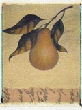 Single Pear Photographic Print by Jennifer Kennard