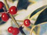 Holly with Berries Photographic Print by Jennifer Kennard