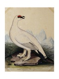 A Ptarmigan Giclee Print by Christopher Atkinson