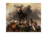 Scene in Braemar - Highland Deer Giclee Print by Edwin Henry Landseer