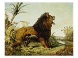 A Lion in a Jungle Landscape Giclee Print by William Huggins