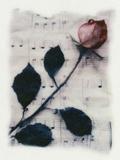Rose et musique Photographie par Kim Koza