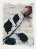 Rose and Music Photographic Print by Kim Koza