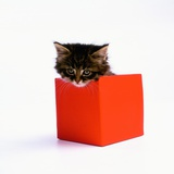 Kitten Sitting in Red Box Photographic Print by Pat Doyle