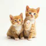 Two Kittens Photographic Print by Pat Doyle