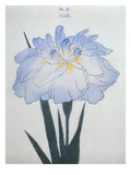 U-Chu Book of a Light Blue Iris Giclee Print by Stapleton Collection