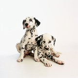 Dalmatian Puppies Photographic Print by Pat Doyle