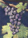 Cabernet Franc Cluster Photographic Print by Jennifer Kennard