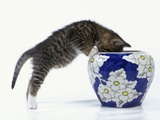 Kitten Looking in Decorated Vase Photographic Print by Pat Doyle