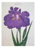 Kyo-Nishiki Book of a Purple Iris Giclee Print by  Stapleton Collection