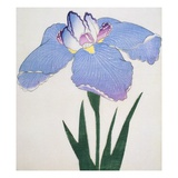 Kaku Jaku Ro Book of a Blue Iris Giclee Print by  Stapleton Collection