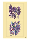 Olive Branch Giclee Print by  Steve Collier Studio