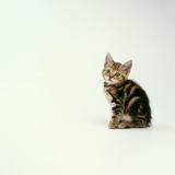 Kitten Photographic Print by Pat Doyle