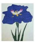 O-Sho-Kun Book of a Blue Iris Giclée-Druck von  Stapleton Collection