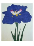 O-Sho-Kun Book of a Blue Iris Giclee Print by  Stapleton Collection