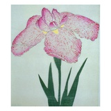 Tanka No-Koe Book of a Pink Iris Giclee Print by Stapleton Collection