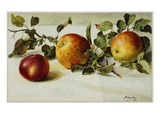 Book Illustration of Apples Giclee Print by Fairfax Muckler