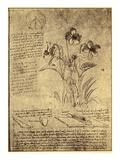 Drawing of Flowers and Diagrams by Leonardo da Vinci Giclee Print by  Bettmann