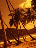 Palm Trees on Beach Photographic Print by Jack Hollingsworth