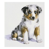 An Australian Shepherd Puppy from My Puppy's Record Book Giclee Print by Alexandra Day
