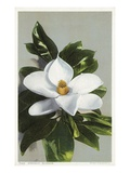 Magnolia Blossom Giclee Print by  Lake County Museum