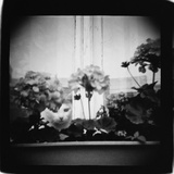 Cat in Window and Geraniums, Domesticity Photographic Print by Annette Fournet