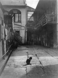 A Cat in a New Orleans Courtyard Fotoprint