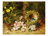 A Primrose and Birds Nest on a Mossy Bank Giclee Print by Oliver Clare