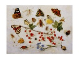 Still Life with Butterflies, Moths and Redcurrants Giclee Print by Jan Van Kessel the Younger