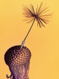 Dandelion Photographic Print by Andy Small