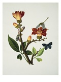 A Coral Tree with a Butterfly, Dragonfly and Grasshopper, Circa 1805 Giclée-Druck von Cantonese School