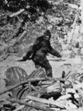 Angebliches Foto von Bigfoot Fotodruck von  Bettmann