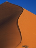 Tree and Sand Dune Photographic Print by Darrell Gulin