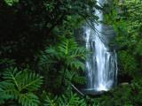 Wailua Falls Cascades into a Forest Glen Fotografisk tryk af Chris Johns