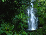 Wailua Falls Cascades into a Forest Glen Photographic Print by Chris Johns