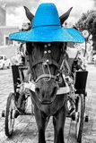 ¡Viva Mexico! B&W Collection - Horse with Blue straw Hat Photographic Print by Philippe Hugonnard