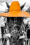 ¡Viva Mexico! B&W Collection - Portrait of Horse with Light Orange Hat Photographic Print by Philippe Hugonnard